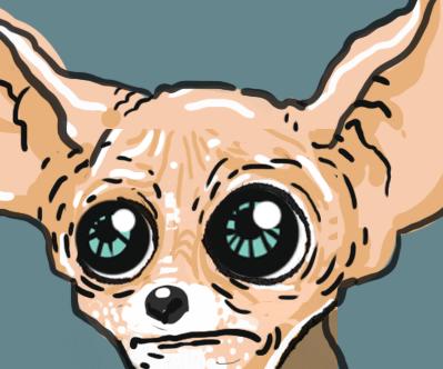 Sad Chihuahua.